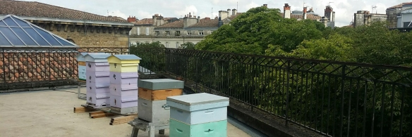 cropped capc-beehives