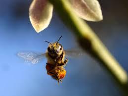 tinybee