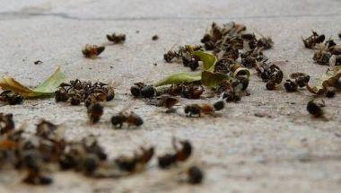 deadbees